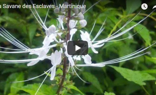 La Savane des Esclaves – Martinique