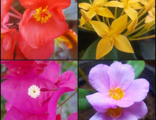 Flowers 🌺 Fleurs 🌺 Floras 🌺  Flores 🌺  Fiori  🌺 Blumen 🌺 花 🌺 цветы