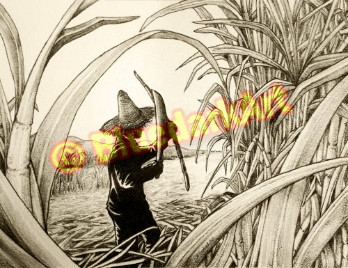 🔴 Sugar Cane Worker Pencil Art © BluedarkArt TheChameleonArt 🔸 Buy / Download 🔴