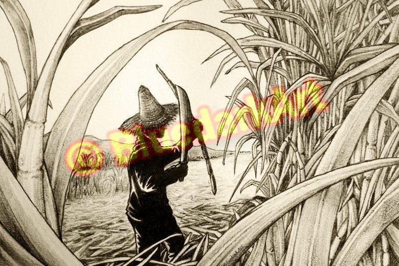 🔴 Sugar Cane Worker Pencil Art © BluedarkArt TheChameleonArt 🔸 Buy / Download 🔴