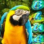 Bluedarkat Lem Twitter 👉 https://twitter.com/bluedarkatLem